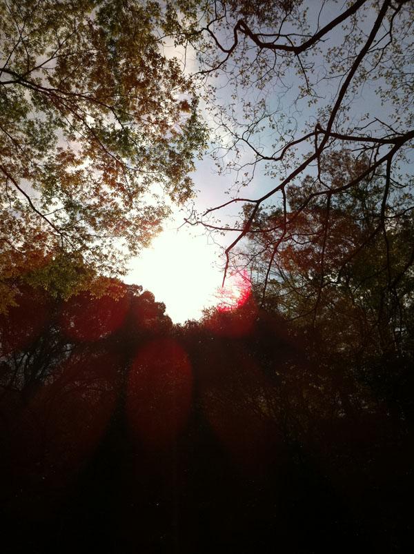 2011年4月24日 その日の夕方の写真です。
