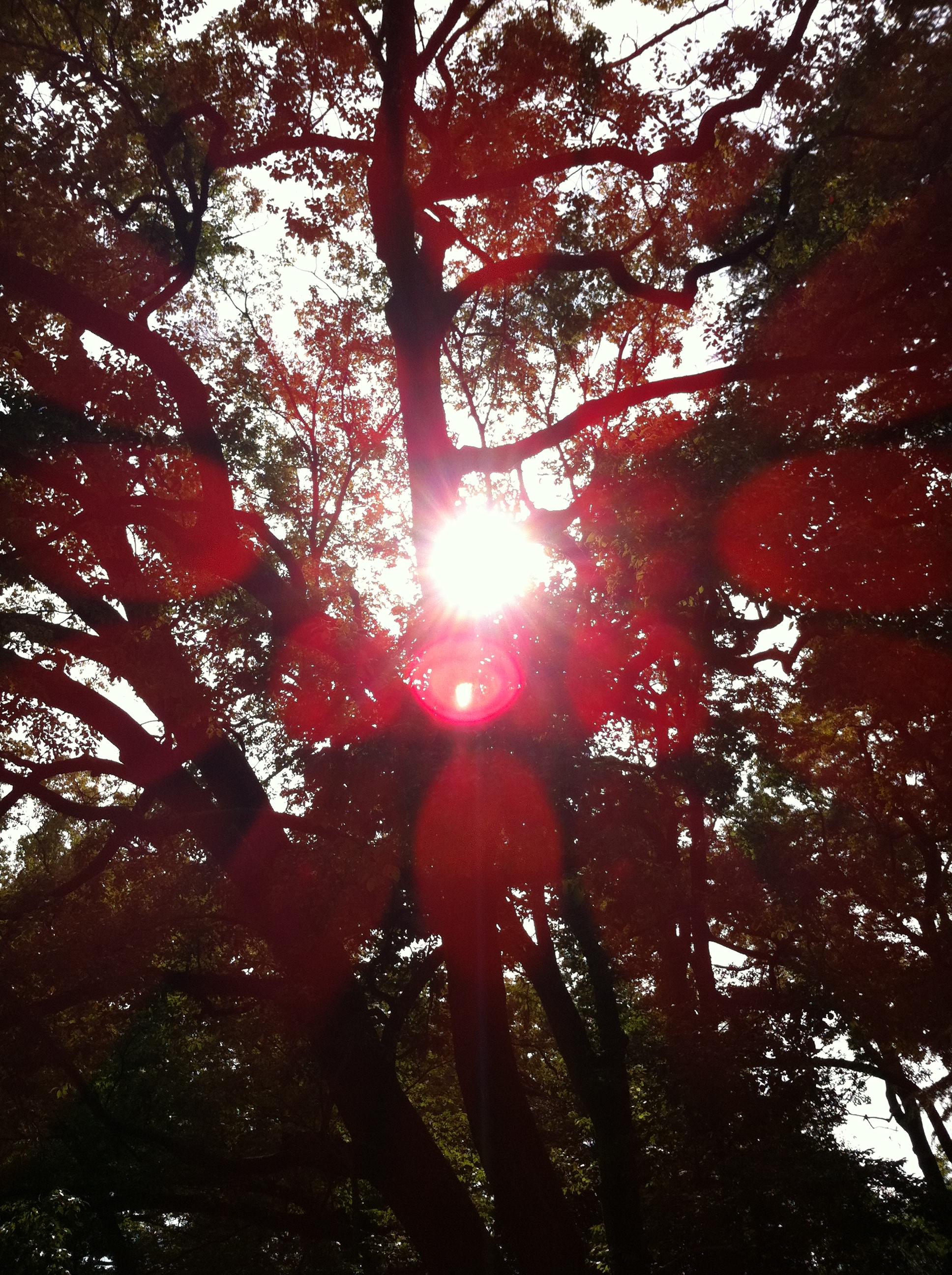 2011年10月29日 木漏れ日が綺麗です。