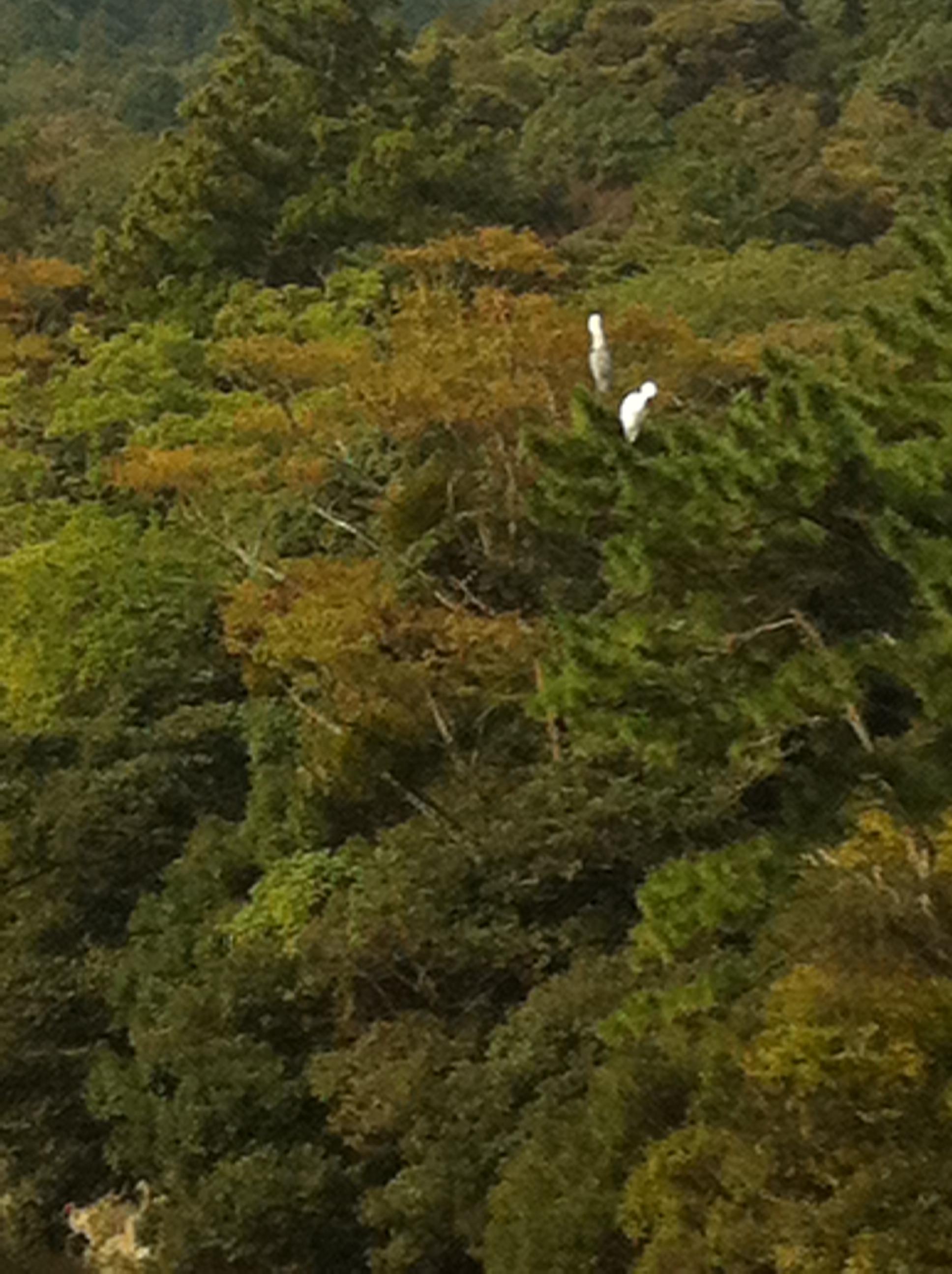 2011年10月10日 横の写真の鷺の部分を 拡大しました。