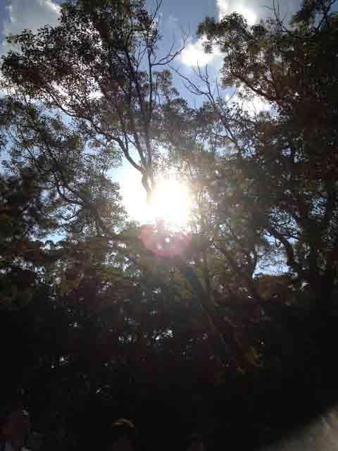10月31日 良い天気です