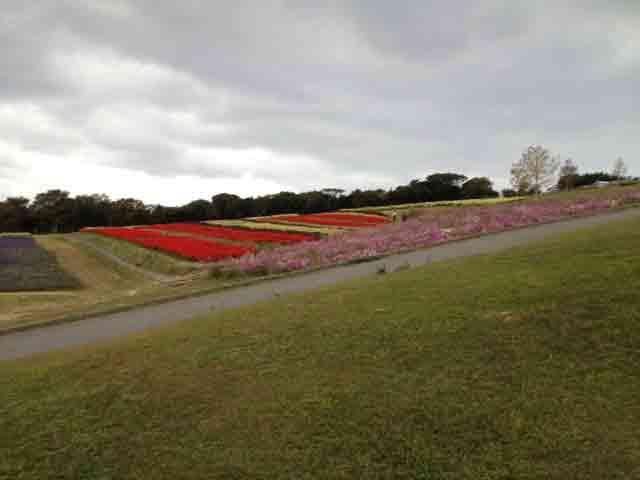 11月2日 お花畑に着いた頃には、曇り空