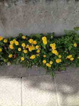 7日道端の花も可憐に咲いています