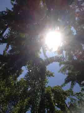 23日樹の葉の間の太陽、素敵です!