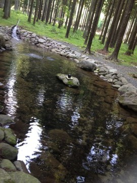 小さな池がありました